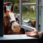 3000_Pferde1_qu